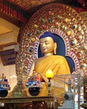 Gautam Buddha in Mclodganj Mobile Wallpaper